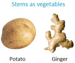 Stems as Vegetables