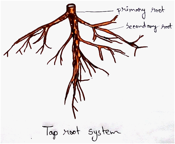 Tap Root System